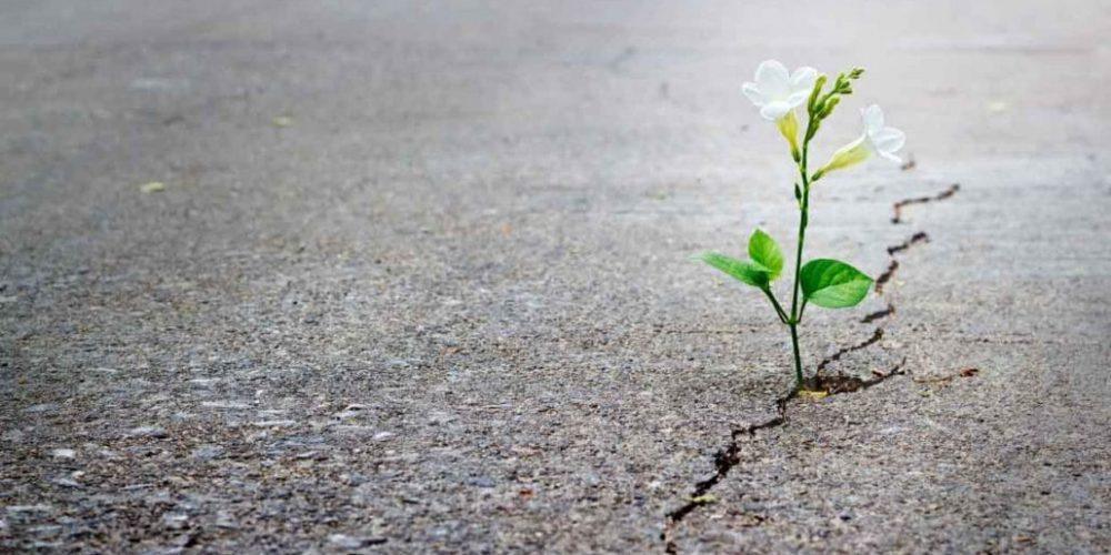 flower in crack on road
